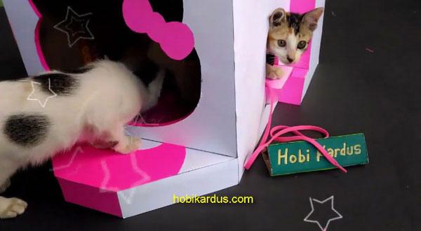 rumah kucing dari kardus bekas