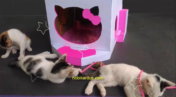 rumah kucing hello kitty dari kardus bekas
